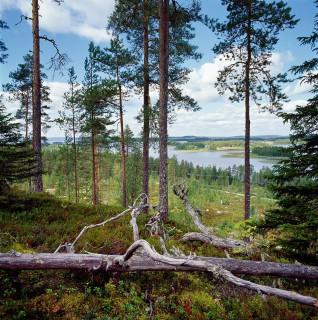 Nurmes, Tapio Heikkilä/YHA Kuvapankki 2001